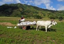 agricultores ANF Polaris