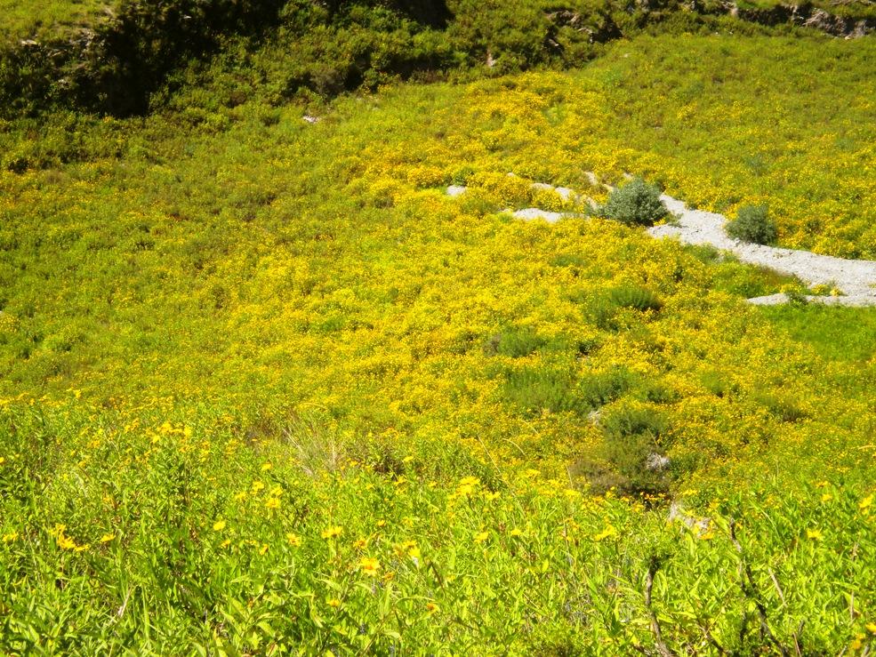 Incontables flores amarillas saludan al viajero. (Foto: Pablo Harvey)