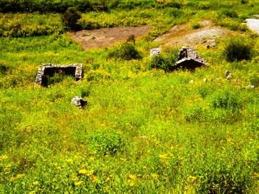 Flores amarillas. Casas antiguas abandonadas. Pueblo Viejo, en San Juan (Iruya). (Foto: Pablo Harvey)