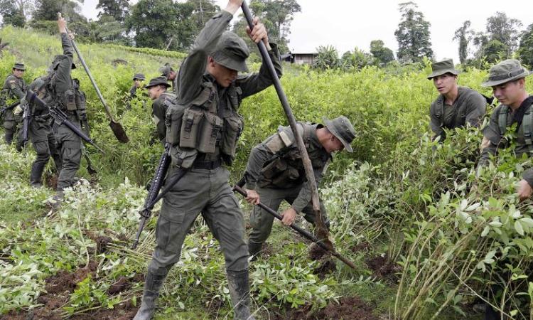 erradicación forzada de coca