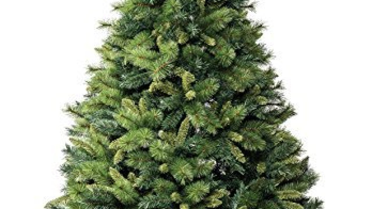 Abete del caucaso, supporto per albero di natale,. I 10 Migliori Alberi Di Natale 2020 Notizie Scientifiche It