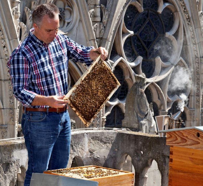 Incendio di Notre Dame, centinaia di migliaia di api su un tetto miracolosamente sopravvissute