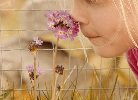 odore fiore profumo