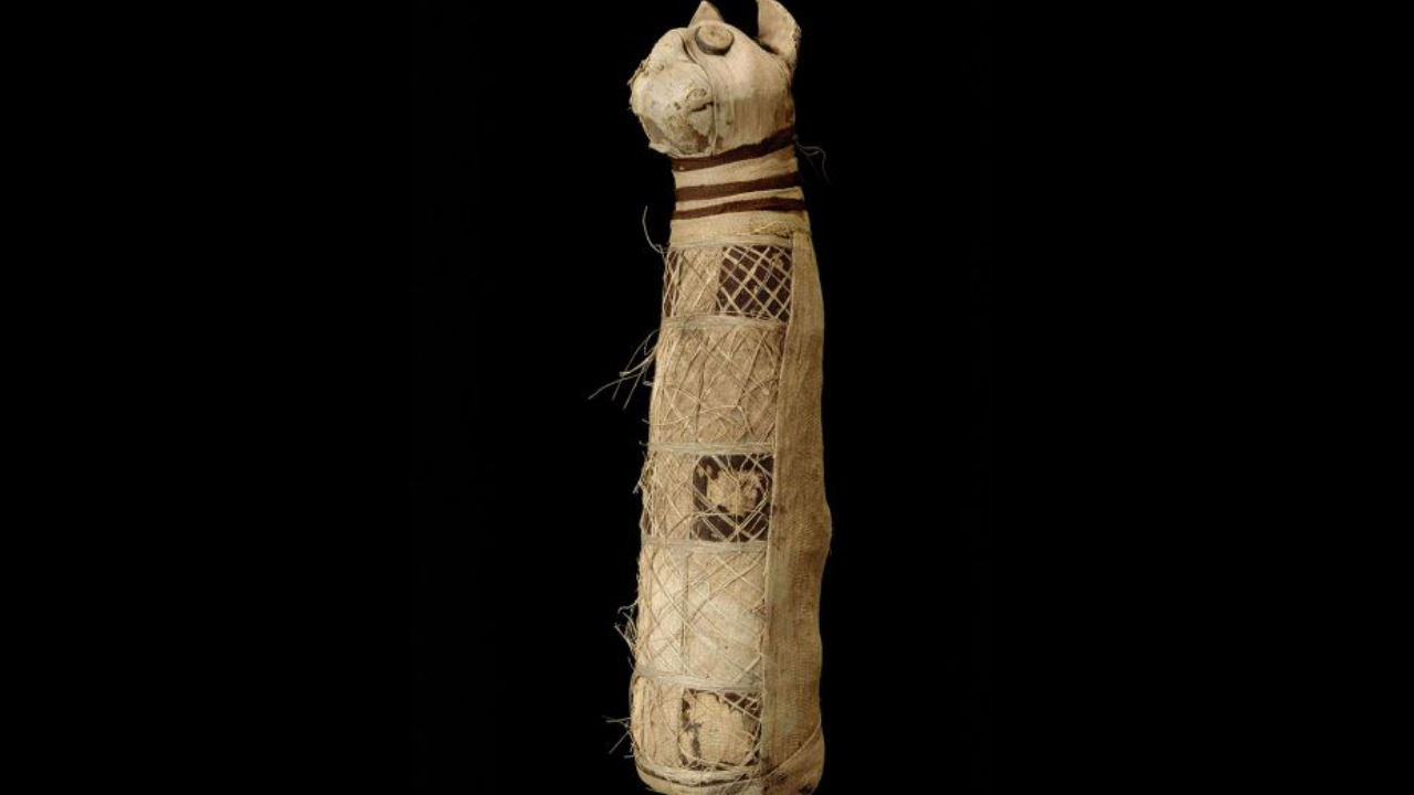 Collegamento con zucchero mummia