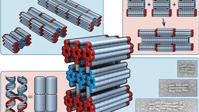 Nanorobot autoassemblanti costruiti con molecole di DNA: non è fantascienza ma realtà