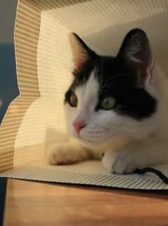 kitty-hiding