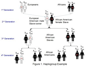 Haplogroup