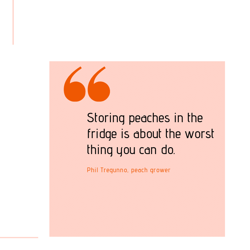 """Graphic with quote from Phil Tregunno, a peach grower. """"Storing peaches in the fridge is about the worst thing you can do."""