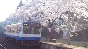 人気のお花見スポット「能登鹿島駅」は駅愛称名「能登さくら駅」【穴水町】
