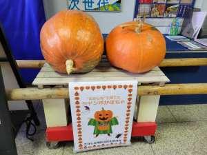 高階地区の代表名物ジャンボかぼちゃは驚きのサイズ!【七尾市 高階地区】