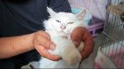 notodogmeat-cats-1
