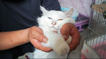 notodogmeat-cats-1