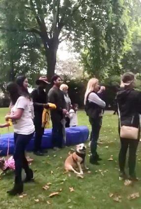 Dog Show Fun Day NoToDogMeat Adoptdontshop 03