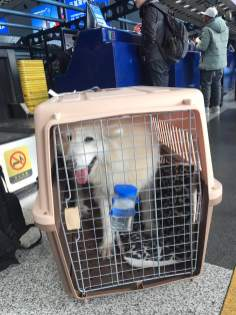 Felicity at the airport in China