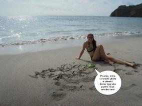 foki na plaży_podpis2