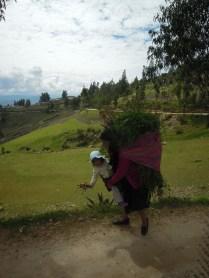 Cajamarca (44)