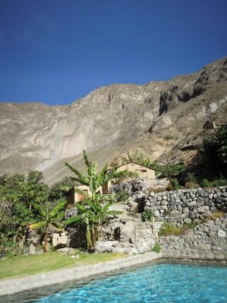 Colca kanion_Oasis (3)