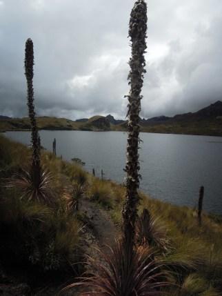 Parque Nacional Cajas (13)