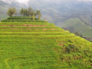 Longji - Dashai Village - Rice Fields (120)