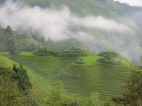 Longji - Dashai Village - Rice Fields (123)