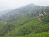 Longji - Dashai Village - Rice Fields (84)