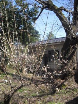 3.29梅と桜