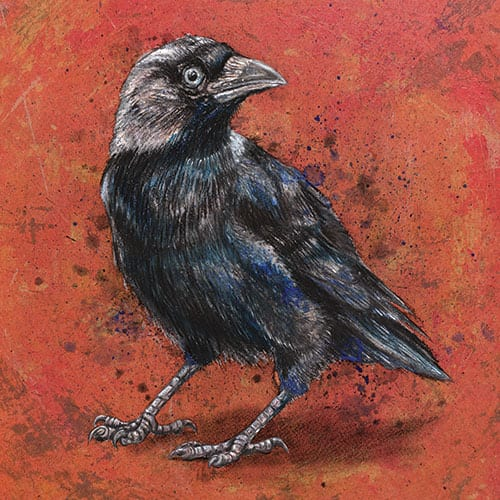 Jackdaw ink and pastel drawing