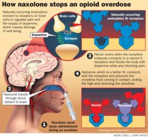 How naxolone stops an opioid overdose