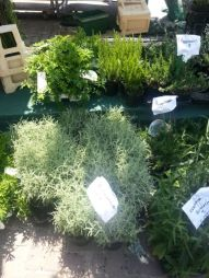 scented herbs