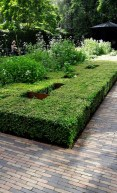 Garden 5 is designed to reflect an Amsterdam block, the box hedge represents buildings and the spaces are the gardens