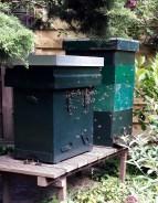 Bees buzz at Garden 7