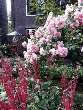 Abundance of roses at Garden 7