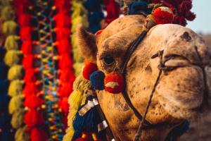 weird indian traditons, Bizarre indian traditions