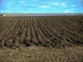 Ploughed yesterday
