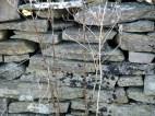 Dead vegetation, hip-shot