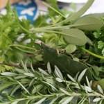 Organic herbs from my garden
