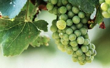 Vineyards - Murphy, NC - #20