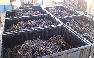 Vineyards - Murphy, NC - #25