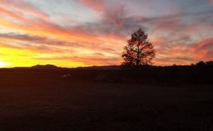 Vineyards - Murphy, NC - #28