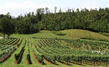 Vineyards - Murphy, NC - #8
