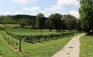 Vineyards - Murphy, NC - #16