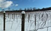 Vineyards - Murphy, NC - #24