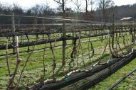 Nottely River Valley Vineyards - Murphy, NC - #2