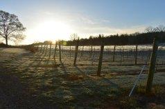 April Morning at Nottely River Valley Vineyards - Murphy, NC