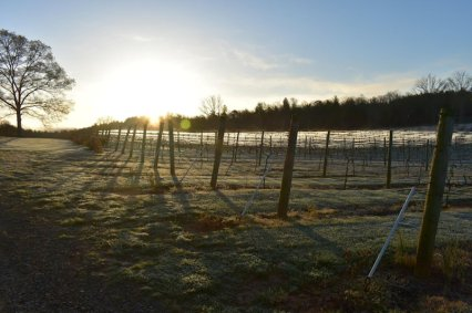 April Morning at Nottely River Valley Vineyards - Murphy, NC