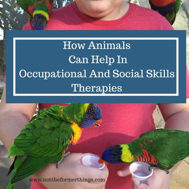 How Animals Can Help In Occupational And Social Skills Therapies
