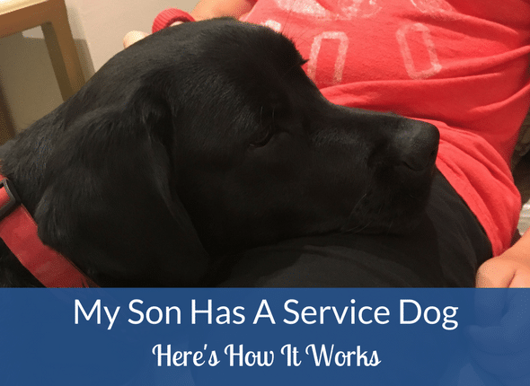 My son has a service dog. Here is how it works. #servicedog #autism #anxiety