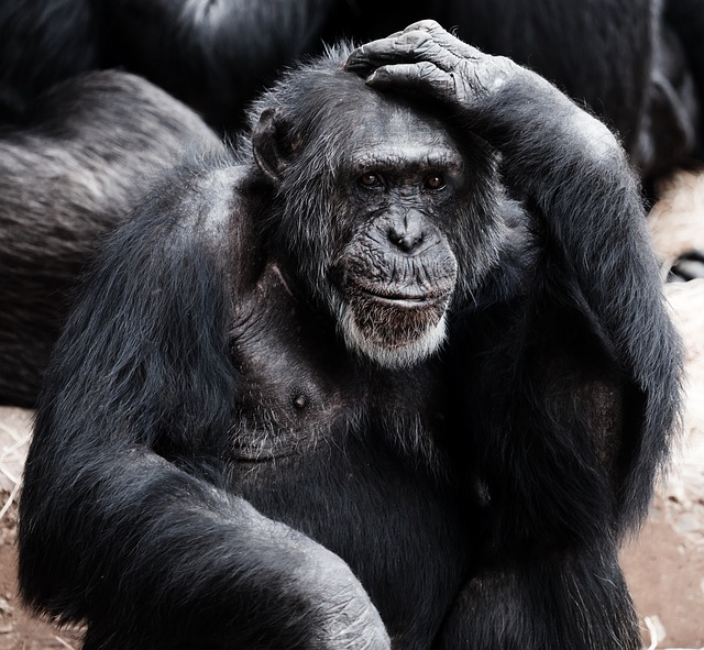 Can an Ape Create a Sentence?