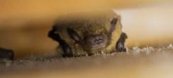 Ploughman Wood bat box survey