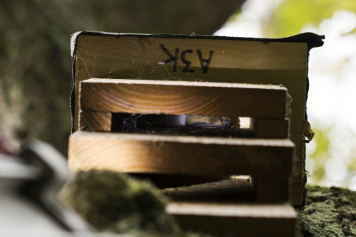 Ploughman Wood - Soprano pipistrelle in Kent box A3K - 17-10-16